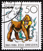 Postage stamp GDR 1986 Mandrill Monkey — Stock Photo