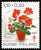 Postage stamp Finland 1981 Geranium, Pelargonium Zonale — Stock Photo