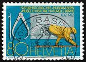 Postage stamp Switzerland 1982 Bern Museum of Natural History — Stock Photo