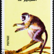 Stock Photo: Postage stamp Fujeira 1972 Monkey