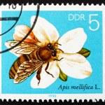 Постер, плакат: Postage stamp GDR 1990 Apple Blossom Bees Collecting Nectar
