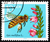 Postage stamp GDR 1990 Blooming Heather, Bees Collecting Nectar — Stock Photo