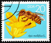 Postage stamp GDR 1990 Rape Blossom, Bees Collecting Nectar — Stock Photo