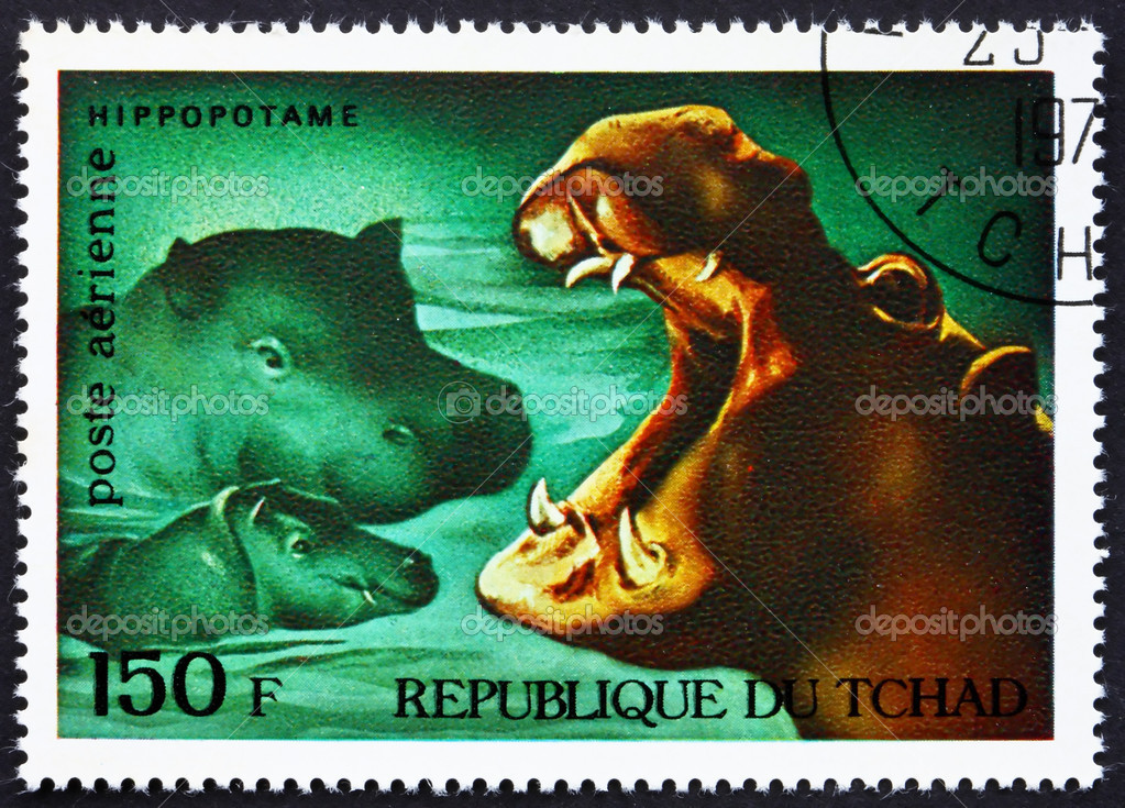 CHAD - CIRCA 1972: a stamp printed in the Chad shows Hippopotamuses, African Wild Animals, circa 1972 — Stock Photo #11525284