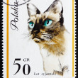 Postage stamp Poland 1963 Siamese Cat - Stock Photo