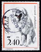 почтовая марка польша 1963 овчарка — Стоковое фото