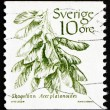 Postage stamp Sweden 1983 Norway Maple, Tree — Stock Photo #11595863