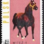 Postage stamp Poland 1963 Arab Stallion — Stock Photo
