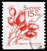 Postage stamp Sweden 1983 Dog rose, Wild Rose — Stock Photo