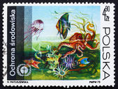 Postage stamp Poland 1973 Underwater Fauna and Flora — Stock Photo