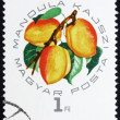 Postage stamp Hungary 1964 Almond Apricot — Stock Photo #11610858