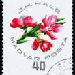 Postage stamp Hungary 1964 Peach Blossoms — Stock Photo #11610870