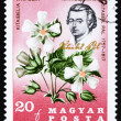Stock Photo: Postage stamp Hungary 1967 Pal Kitaibel and KitaibeliVitifolia