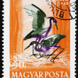 Stock Photo: Postage stamp Hungary 1959 Purple Heron, ArdePurpurea