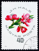 Postage stamp Hungary 1964 Peach Blossoms — Stock Photo