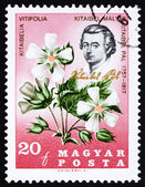 Postage stamp Hungary 1967 Pal Kitaibel and Kitaibelia Vitifolia — Stock Photo