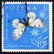 Postage stamp Poland 1961 Clouded Apollo, Butterfly - Foto de Stock