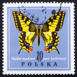 Postage stamp Poland 1967 Old World Swallowtail, Butterfly — Stock Photo #11624794
