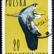 Stock Photo: Postage stamp Poland 1964 Grey Heron, ArdeCinerea, Wading Bird