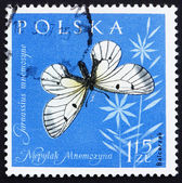 Postage stamp Poland 1961 Clouded Apollo, Butterfly — Stock Photo
