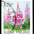 Stock Photo: Postage stamp Finland 1992 Rosebay Willowherb, Epilobium Angusti