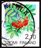 Fruta estampilla finlandia 1991 serbal — Foto de Stock