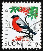 Postage stamp Finland 1991 Eurasian Bullfinch, Bird — Stock Photo