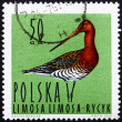 Postage stamp Poland 1964 Black-tailed Godwit, Shorebird — Stock Photo