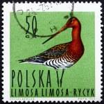 Postage stamp Poland 1964 Black-tailed Godwit, Shorebird — Stock Photo