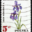 Postage stamp Poland 1967 Iris Sibirica, Medical Plant — Stock Photo