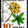 图库照片: Postage stamp Poland 1967 AzalePontica, Medical Plant
