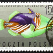 Postage stamp Poland 1967 Striped Triggerfish, Tropical Fish — Stock Photo