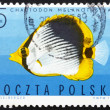 Postage stamp Poland 1967 Striped Butterflyfish, Tropical Fish — Stock Photo #11732991