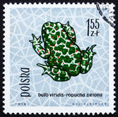 Postage stamp Poland 1963 Green Toad, Amphibian — Stock Photo