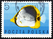 Postage stamp Poland 1967 Striped Butterflyfish, Tropical Fish — Stock Photo