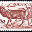 Postage stamp Czechoslovaki1959 Red Deer, Cervus Elaphus — Stock Photo #11905353
