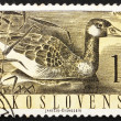 Postage stamp Czechoslovakia 1960 Greylag Goose, Anser Anser - Stock Photo