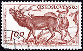 Postage stamp Czechoslovakia 1959 Red Deer, Cervus Elaphus — Stock Photo