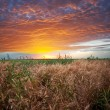 Field on sunset — Stock Photo #10976029