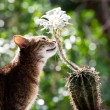 Cat and flower — Stock Photo