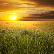 Field on sunset — Stock Photo #11213528