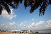 Sri lanka kumsalda — Stok fotoğraf