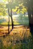 Solig trädgård — Stockfoto