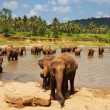 Stock Photo: Elephant on Sri Lanka