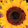 Sunflower Bouquet — Stock Photo