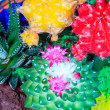 Cactus Bouquet — Stock Photo #11716817