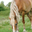 Horse on the green grass — Stockfoto