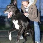 błędne pies skacząc od jego właściciela — Zdjęcie stockowe