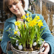 Stock Photo: Basked with yellow daffodils