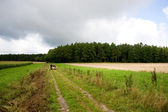 A group of hikers walking on a unpaved road, next to a wheat field, in the Ardennes mountains. — Stock Photo